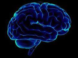 Ученые обнаружили, что мозг человека производит антибиотики