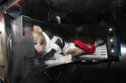 А была ли обезьянка? СМИ сомневаются в запуске Ираном животного в космос