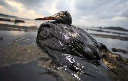 Ученые СФУ нашли способ очистки воды от нефти