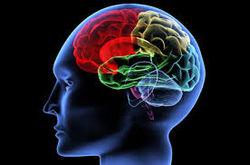 Ученые открыли способ омоложения мозга у пожилых людей