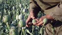 Чем ближе вывод войск НАТО, тем больше производство опиума в Афганистане