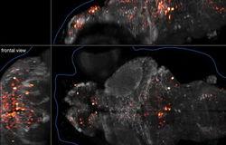 Ученые показали, как реально работает мозг