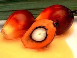 Цены на пальмовое масло катятся вниз