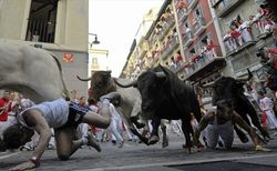 В традиционном пробеге быков по улицам Памплоны пострадало два человека