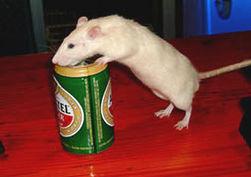 """Алкоголизм можно вылечить, """"стерев"""" из памяти воспоминания о нем"""