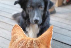 В Казахстане ввели ограничение количества домашних кошек и собак
