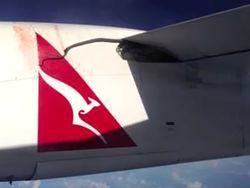 Шоу для пассажиров авиалайнера – питон на крыле летящего самолета
