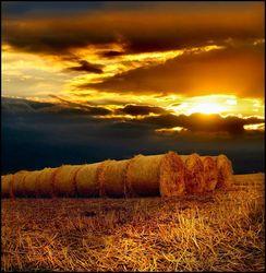 Недельный обзор: что стало с пшеницей, кукурузой и соей