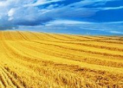 Дорогая земля: ставки на сельхозугодия могут повысить втрое