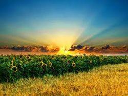 котировки пшеницы начали дорожать