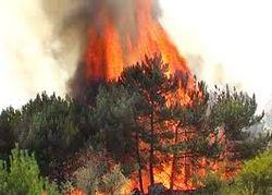До летней жары еще далеко, а на Харьковщине уже горят леса
