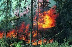 МЧС: достаточно искры для массовых пожаров в Киеве