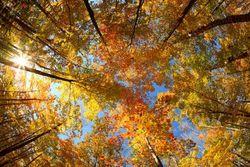 Украинцев ждет теплая осень с небольшим похолоданием в сентябре – синоптики