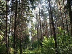 В Подмосковье в лесу найдено тело без вести пропавшего восьмиклассника