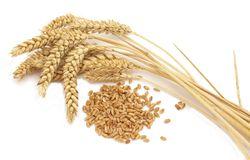 5-го ноября пшеничные контракты продемонстрировали рост