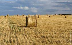 Обзор рынка: что ждет зерно осенью