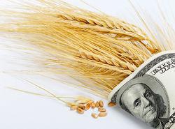 Пшеничные котировки с понедельника опять ушли вниз