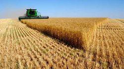 Тренд пшеницы с января сохранился – в Европе она укрепила позиции, а в США опустилась