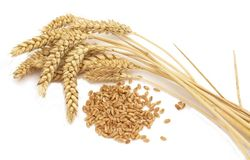 Американская пшеница всю первую неделю года тянула биржевые котировки в минус