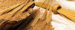Китай будет наращивать импорт пшеницы