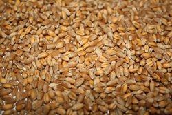 Зависимость от ввоза пшеницы намерен уже этой весной сократить Египет