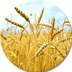 Африканская пшеница теряет в цене