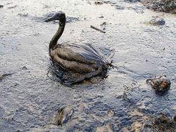 Ученые: разливы нефти можно устранить ингредиентами мороженого