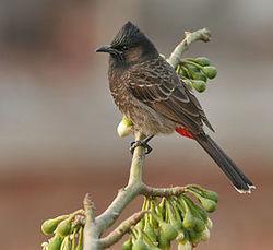 Министерство сельского хозяйства Новой Зеландии преследует… Angry birds