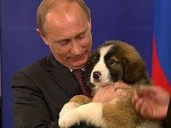 Путин и собаки: развлечение или угроза