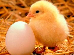 Украина получила право поставлять птицу и яйца на рынок Евросоюза