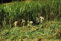 Сахарная кубинская промышленность пополнится 60 млн. долл. от Бразилии