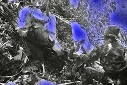 Семьи погибших в аварии SSJ-100 индонезийцев получат по 1,25 млрд