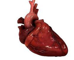 Медицина Израиля: клетки сердца могут восстанавливаться - ученые