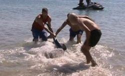 Героя, спасшего ребенка от акулы, в Уэльсе «наградили» увольнением