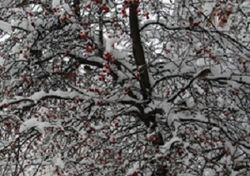 Европу окутал суровый мороз, может зацепить и Украину