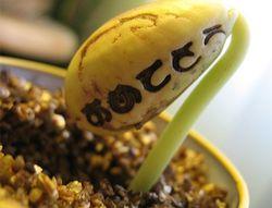 Аграрии Бразилии и Аргентины делают ставу на сою