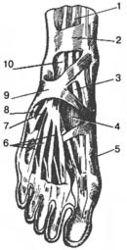 Первая обувь, одетая человеком 40 тысяч лет назад, изменила его ступню