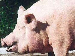 Шок: в ресторане публично режут свиней под пляски голых девиц