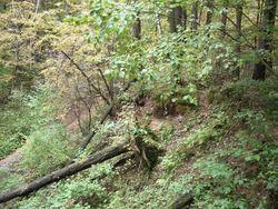 Упавшие деревья - не редкость в Битцевском парке