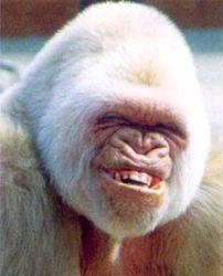 Человека из обезьяны сделал не только труд, но и… драки