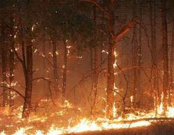 В природоохранном комплексе выгорело 9 га травы и леса