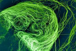 Рак будут лечить наносеткой, разработанной японскими учеными