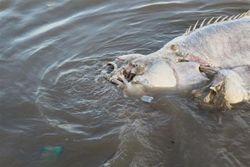 ТОП видео Youtube: доисторическая рыба-мутант поставила зоологов в тупик
