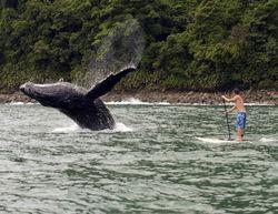 Кит напал на группу серфингистов на пляже в Австралии