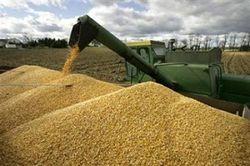 Данные отчетов оказывают давление на пшеницу