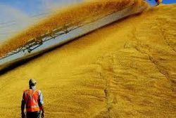 Экспорт зерна из порта Франции растет