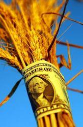 В европейской части России активно поднимается стоимость зерна