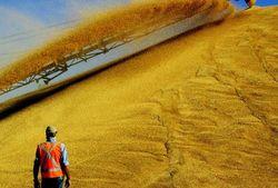 Объём зерна на экспорт в Украине практически исчерпан