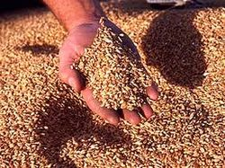 Украина готова поставить в КНР 4 млн. тонн зерна
