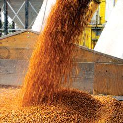 вывоза зерна из Татарстана